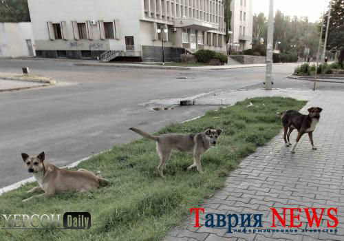 Город Херсон. Бездомные собаки в центре города. Херсон дейли