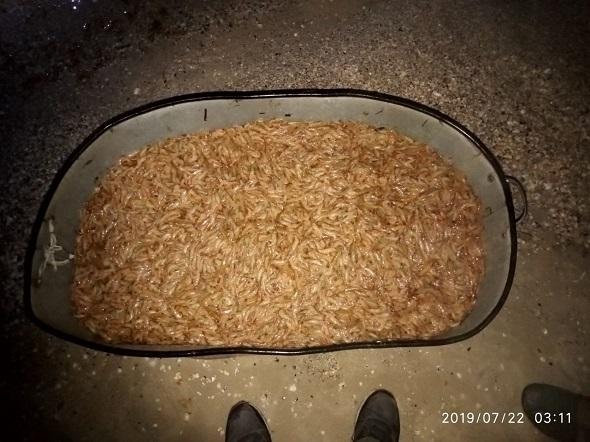 Возле Джарилгача поймали браконьера с креветками почти на 200 тысяч