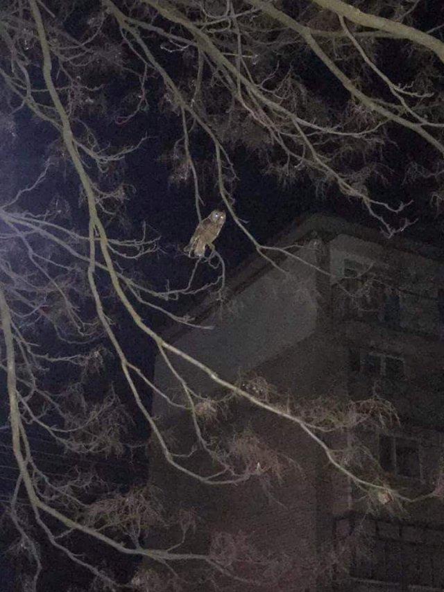 Мешканці Каховки викладають фото місцевих сов у мережу
