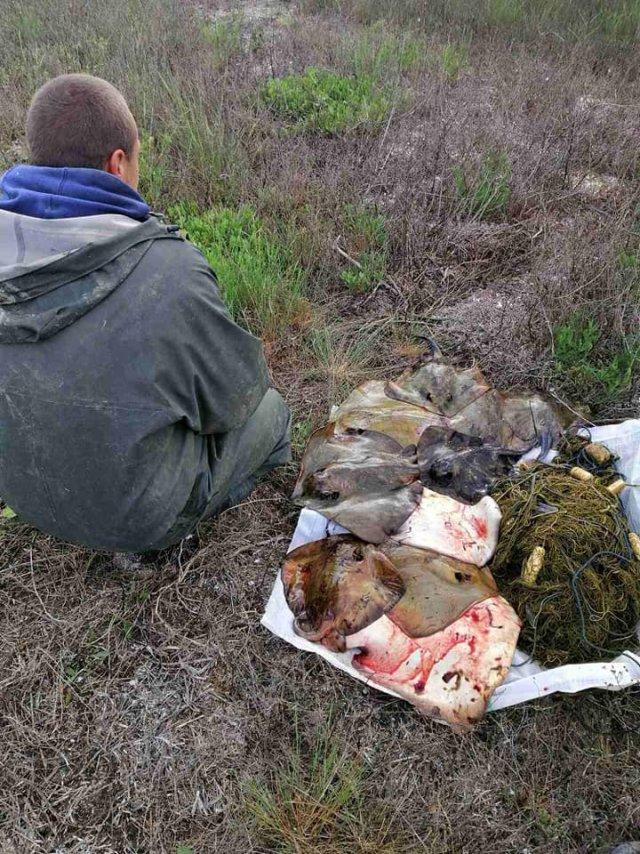 В Херсонской области браконьеры выловили 43 килограмма морских котов
