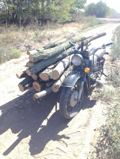 Жители Херсонской области не боятся повышенных штрафов: незаконная вырубка деревьев продолжается