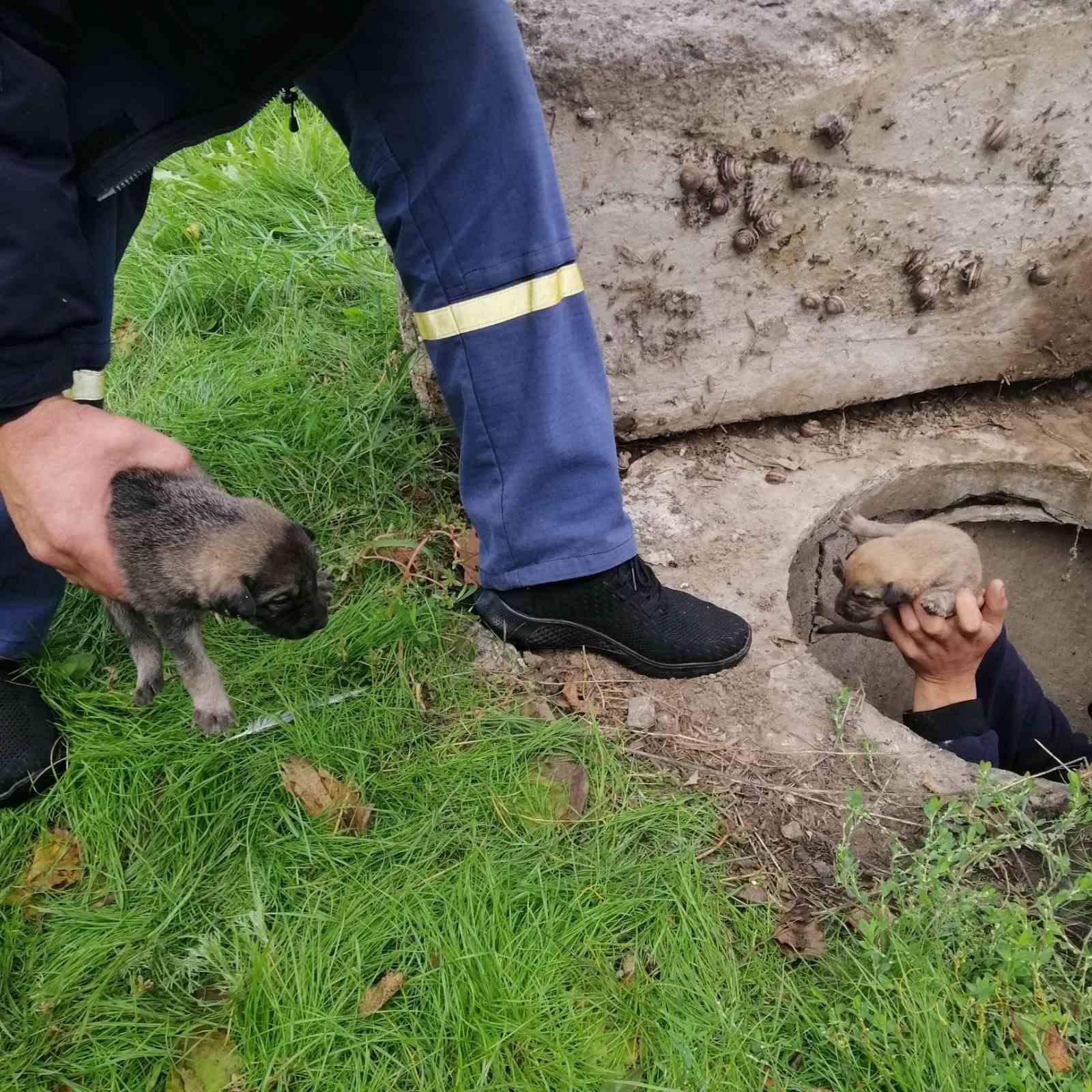 На Херсонщине сотрудники ГСЧС спасли 9 щенков, которые провалились в канализационный коллектор