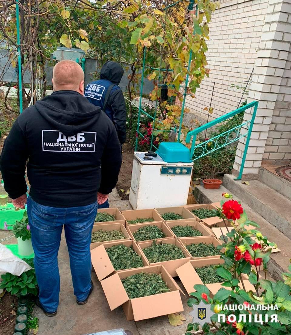 Правоохранители Херсонщины изъяли у жителей Олешковского района более 15 килограммов марихуаны на 1,5 миллиона гривен