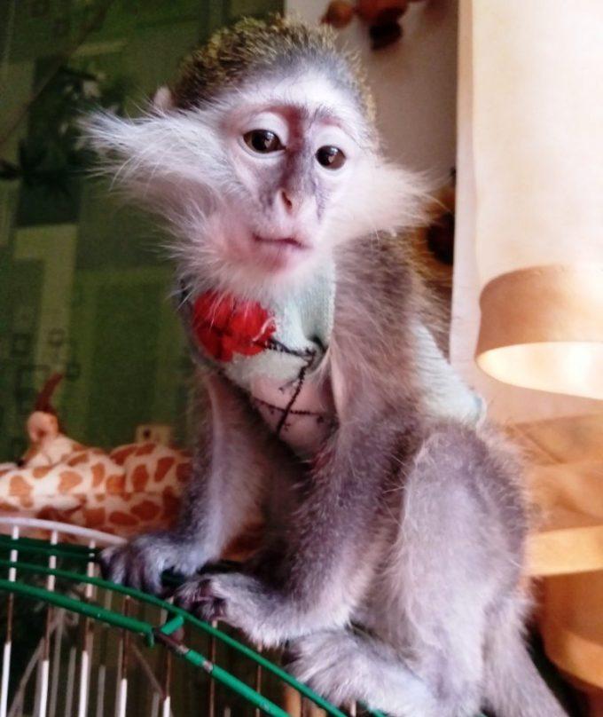 """У новокаховській """"Казковій діброві"""" очікують на поповнення: у звіринець привезуть мавпочку Анфіску"""