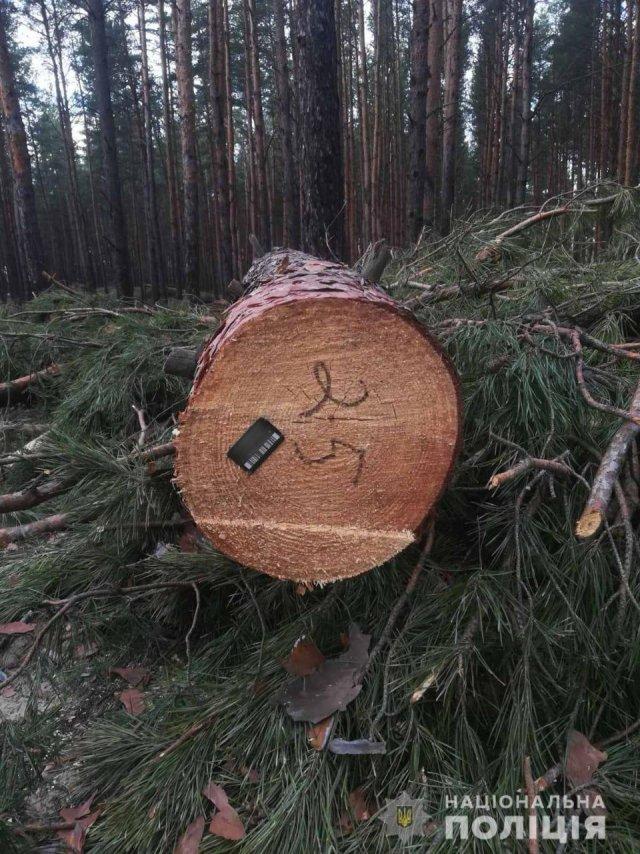 Поліцією розслідується факт вирубки дерев на Херсонщині