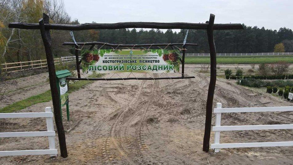 В Олешковском лесничестве на Херсонщине проводят осеннюю лесокультурную кампанию: что это значит