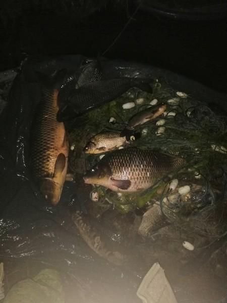 На Херсонщине за неделю сотрудники рыбоохранного патруля выявили более полутора центнера браконьерского улова