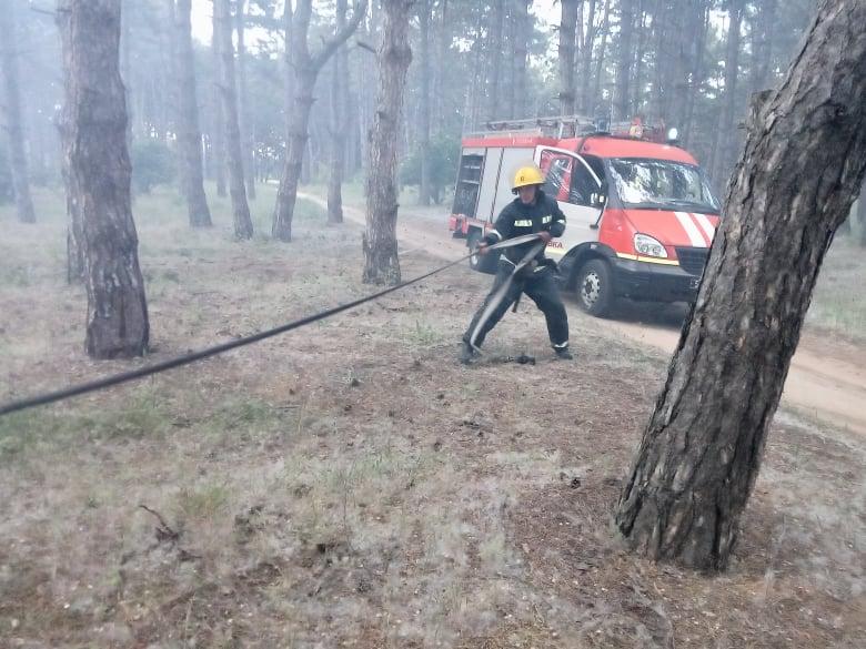 """На Херсонщине горел сосновый бор — благодаря людям пожар не успел """"набрать оборотов"""""""