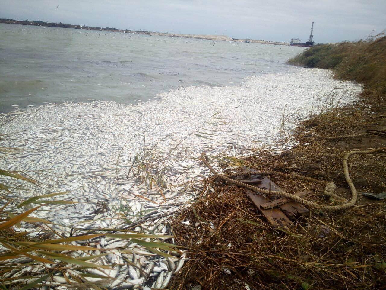 На Херсонщине погибло почти 2 миллиона рыб