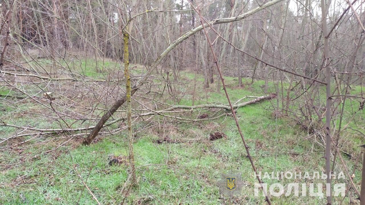 В Голопристанском районе опять пилили лес