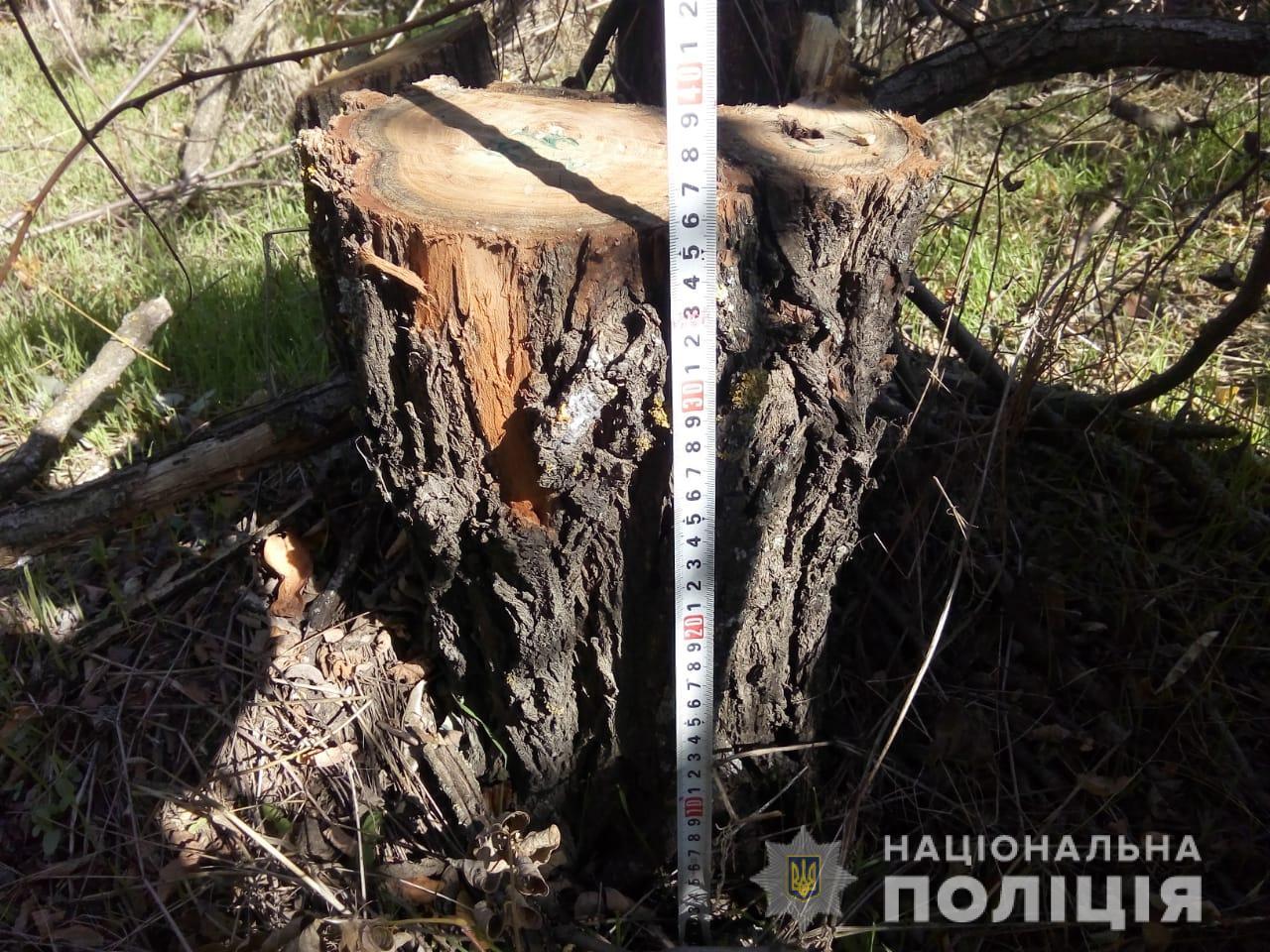 В лесу под Горностаевкой стало на 70 деревьев меньше