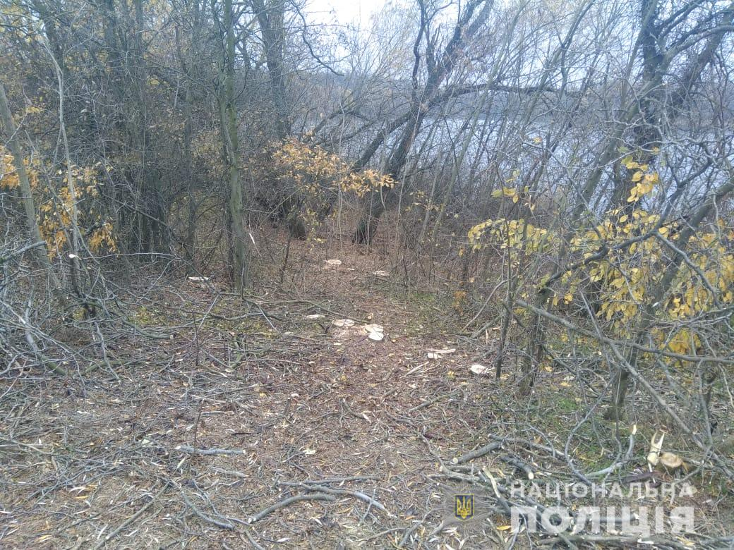 Под Бериславом браконьеры спилили 3 десятка деревьев