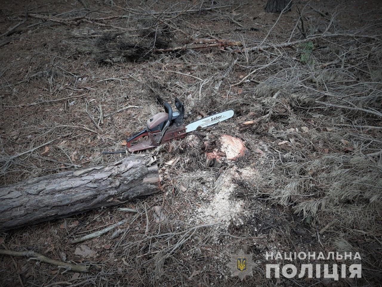 Сегодня на Херсонщине в лесу задержали пилильщика