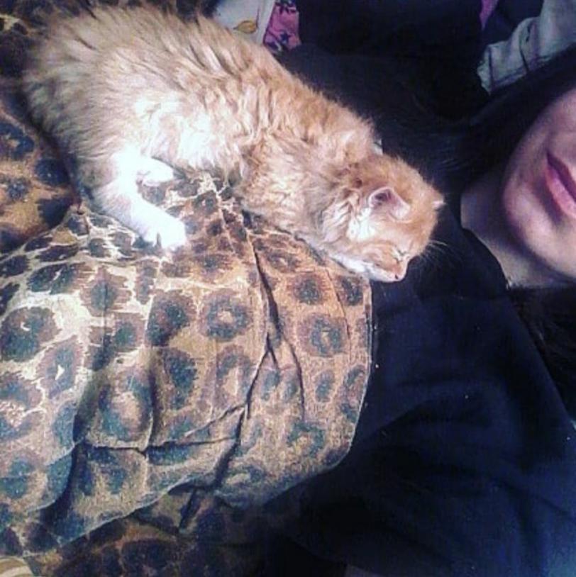 Херсонка, которую подозревают в жестоком обращении с котенком, публиковала в соцсети фото и видео с ним