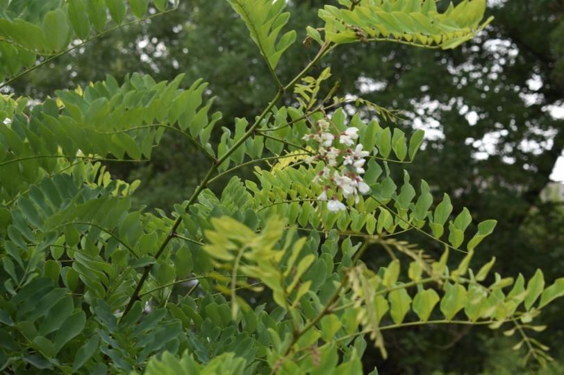 """На Херсонщине снова весна: деревья """"перепутали"""" времена года и зацвели"""