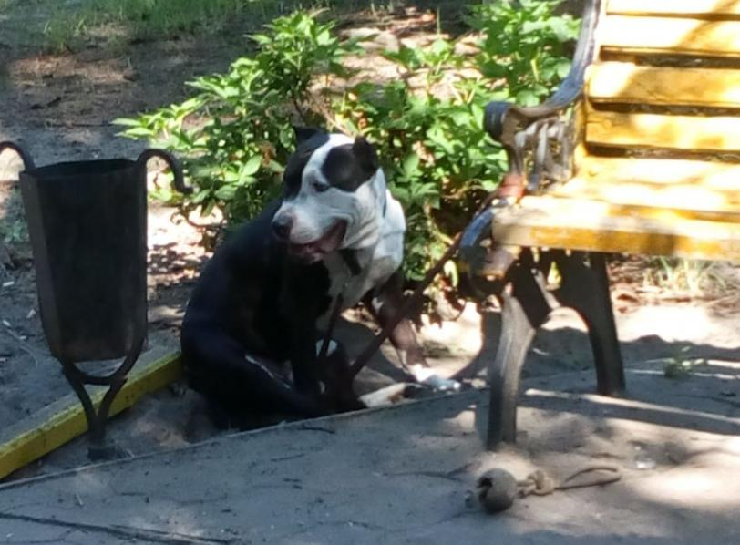 В парке Олешек усыпили агрессивного пса: бросался даже на хозяев