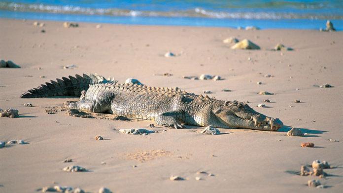 На берегу Азовского моря обнаружили мертвого крокодила