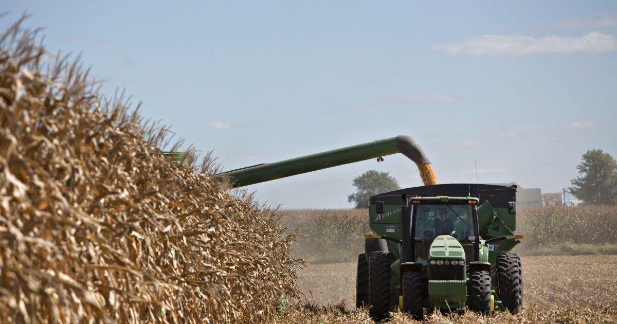 Украинское зерно массово бракуют за границей: что не так с нашим урожаем