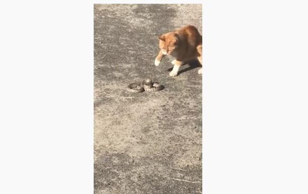В Херсоне кот убил змею, сбежавшую из торгового центра