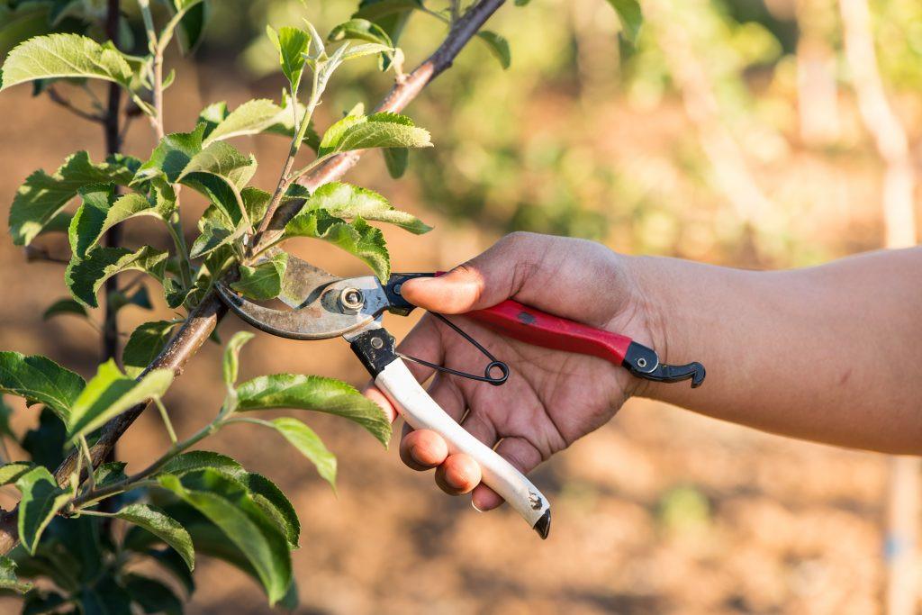 Работа в саду стоила жизни жителю Херсонщины