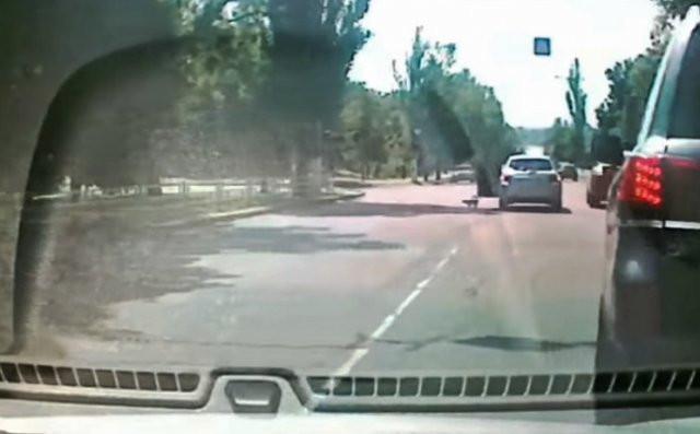 В Херсоне известная ученая выбросила из машины на дорогу кошку, — соцсети