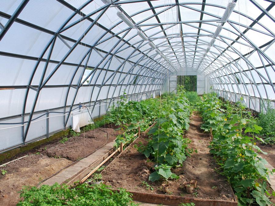 Фермеру на Херсонщине нанесли большой ущерб, возможно конкуренты