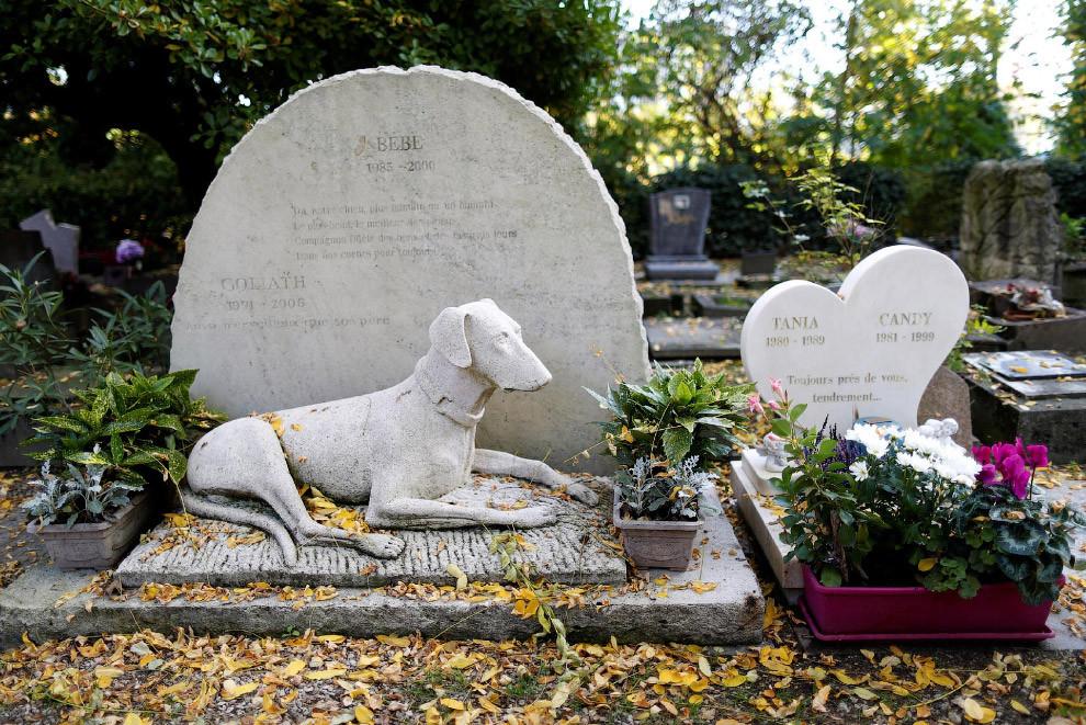 В Херсоне застройщики разрушают неформальное кладбище домашних животных, которое существовало более 20 лет