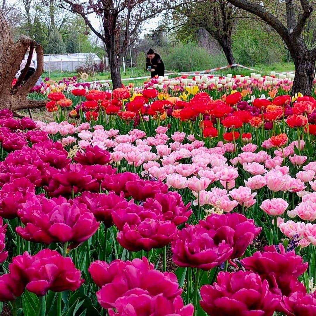 Ботанический сад в Херсоне утопает в цветах: фото и видео