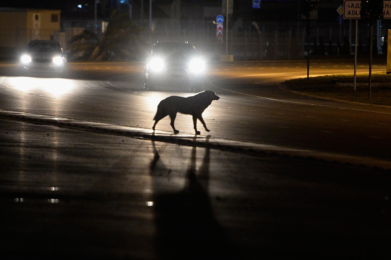 В Херсоне водитель иномарки переехал лабрадора: животное спасали небезразличные жители города